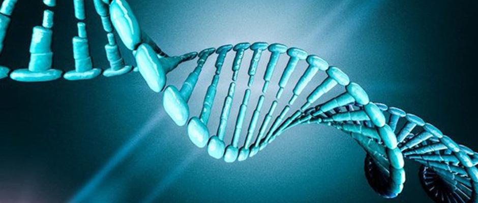 """Sıradan deri hücreleri """"uyarılmış çoklu doğurgan"""" kök hücrelere dönüştürüldü"""