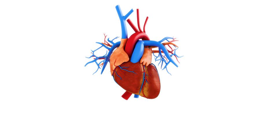 Çabuk yorulma ve nefes darlığı kalp kapak hastalığı belirtisi olabilir